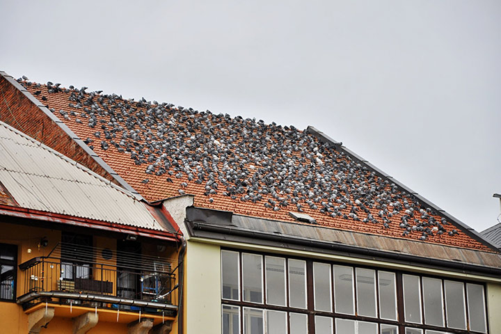 A2B Pest Control are able to install spikes to deter birds from roofs in Tottenham.