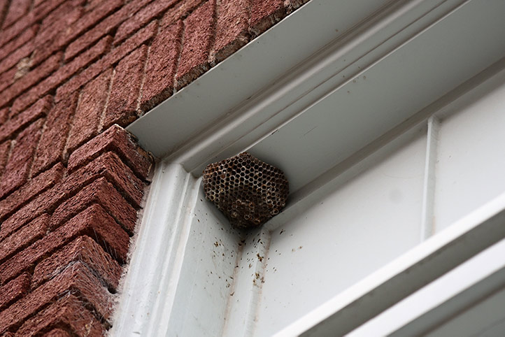 We provide a wasp nest removal service for domestic and commercial properties in Tottenham.